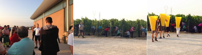 Crash course on how to pick grapes with our enlarged team, then the vendangeurs get to work, followed by the porters, who will help collect the berries.
