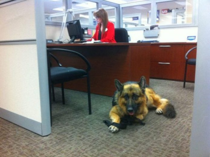 Pets can improve health of this female office worker