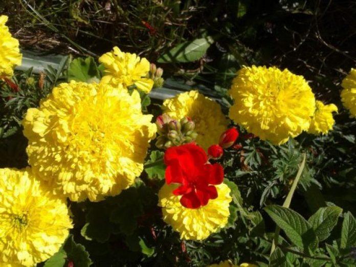 Yellow flowers for spring season