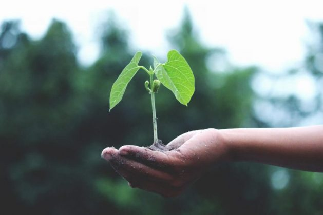 Hand with green leaf symbolizes growth for women in agriculture