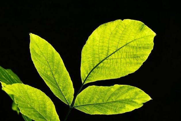 过绿色生活