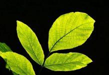 vivre une vie verte