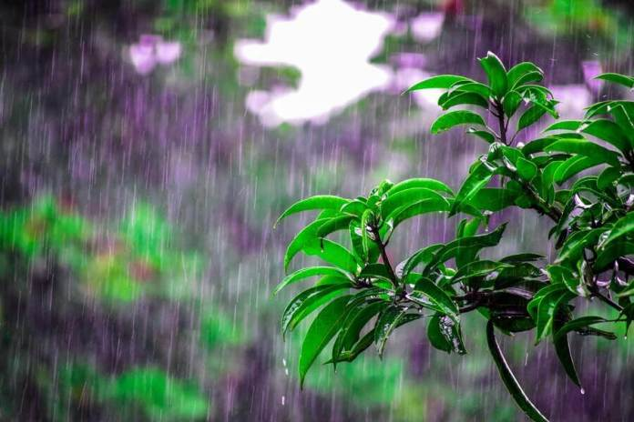 is collecting rainwater illegal