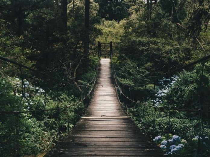 Nature walk for how to improve well-being
