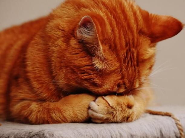 Cat dementia; is your feline at risk?