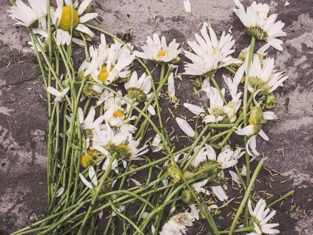 Mourning wrongful death