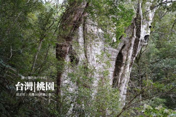 桃園復興|拉拉山神木群步道.巴陵隧道
