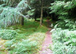 Approaching Longridge Fell