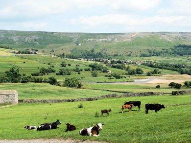 Swaledale Moor
