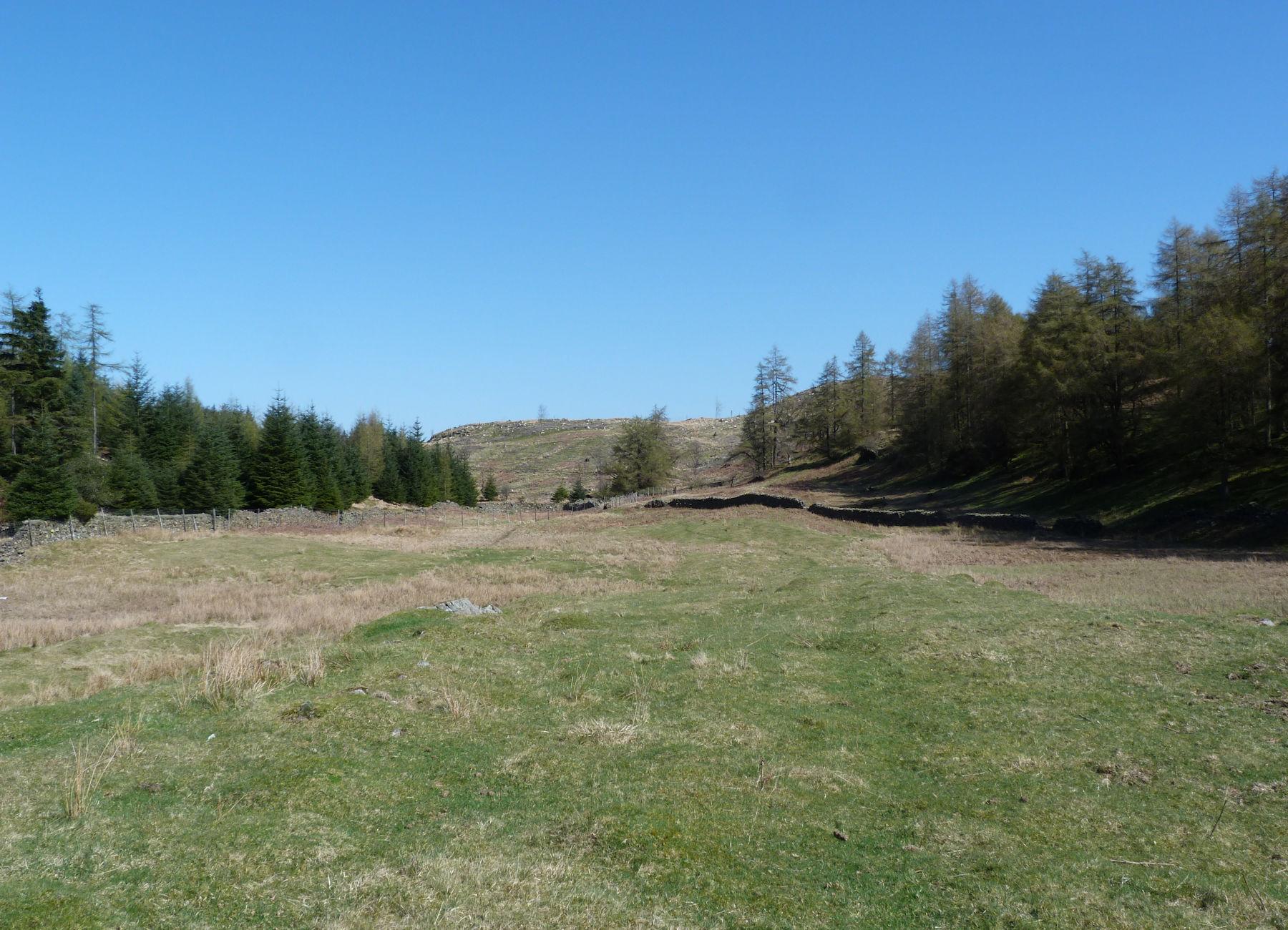 Forestry near Latterbarrow