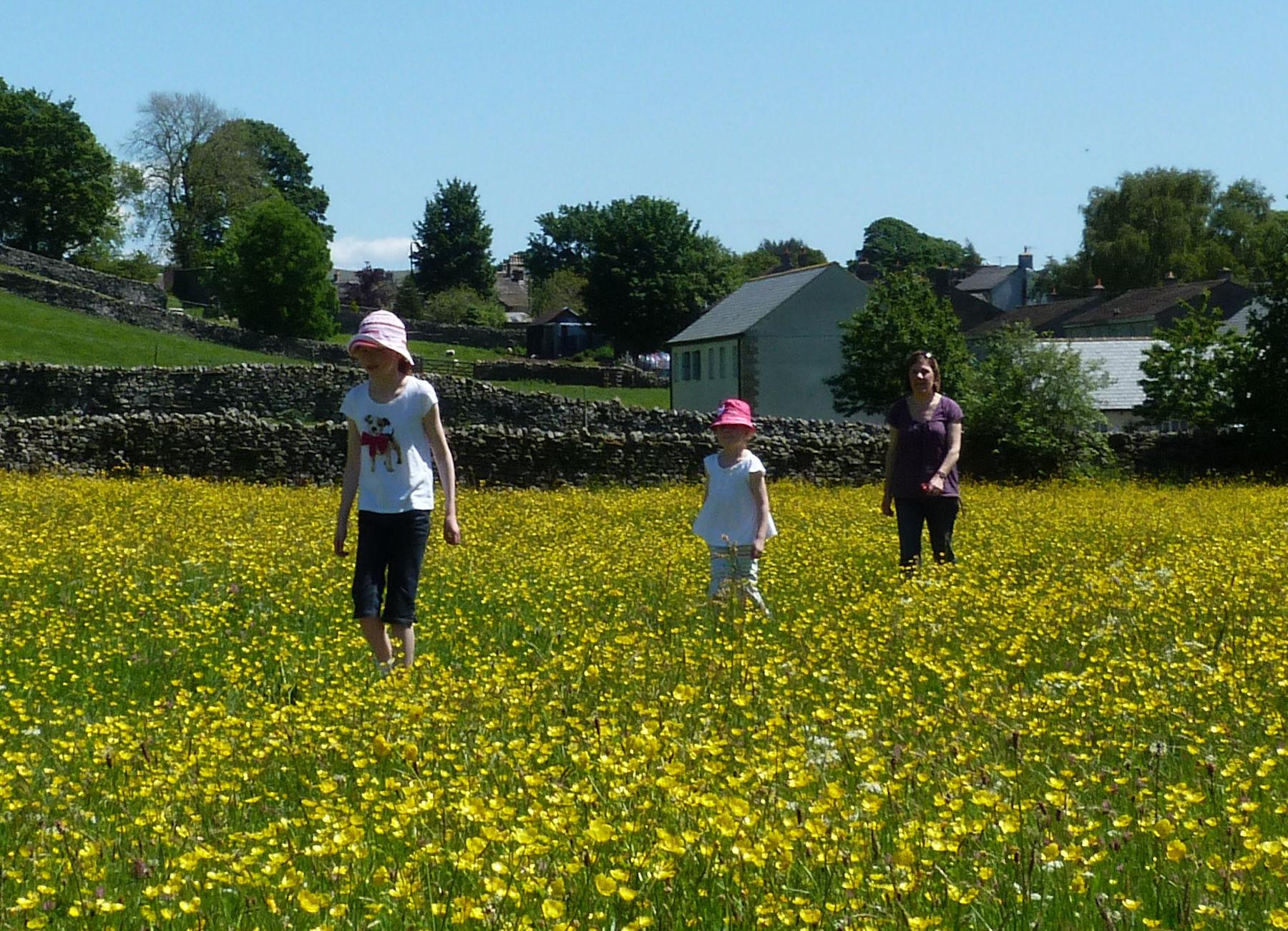 Askrigg Hay Meadows