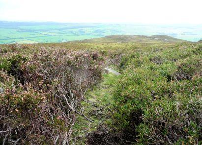 Path through heather