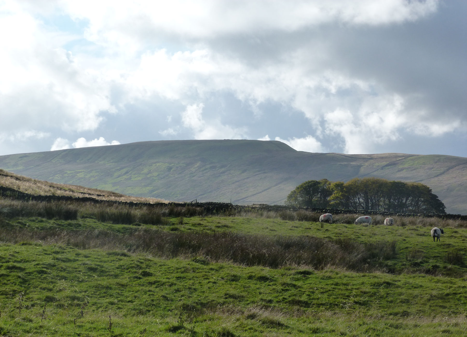 Looking over to Dodd Fell Hill