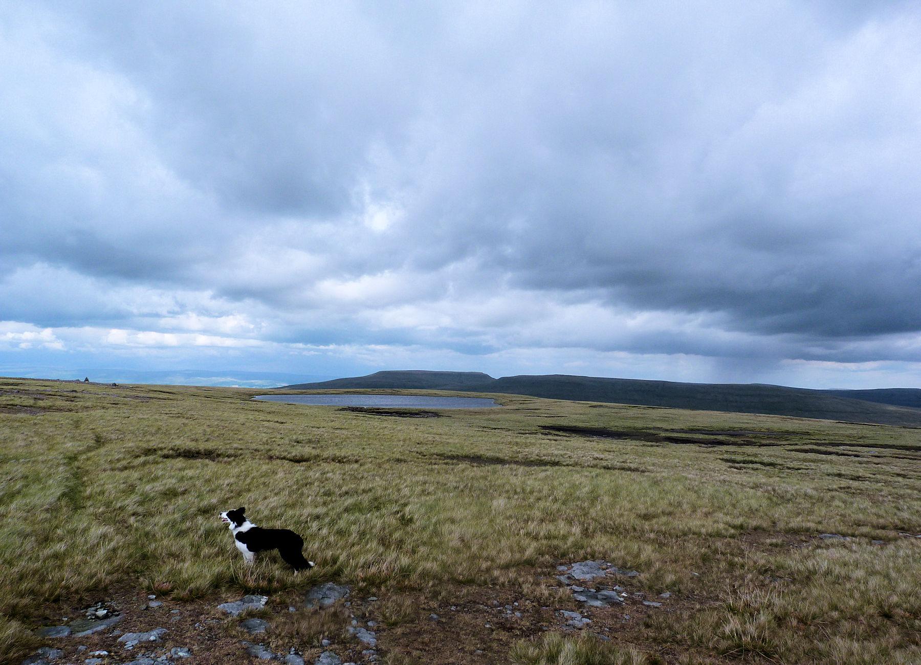Baugh Fell summit tarns