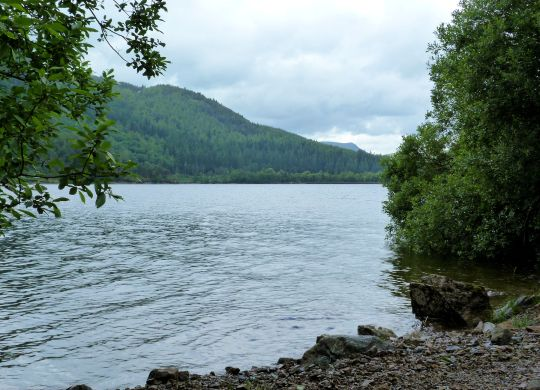 Shoreline Thirlmere
