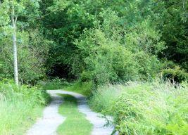 Paths in Gait Barrows