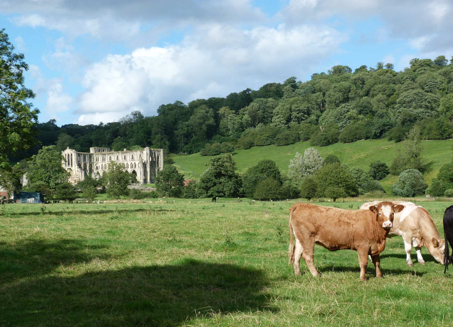Rievaulx Abbey from south