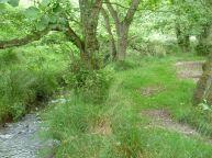 Woods near Levisham
