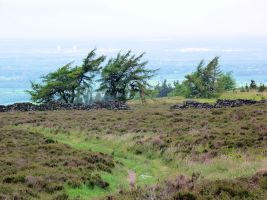 Moorland near Captain Cook