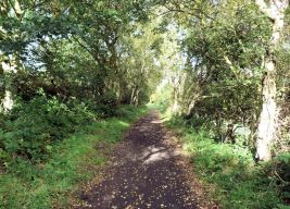Old Railway near Hayburn Wyke