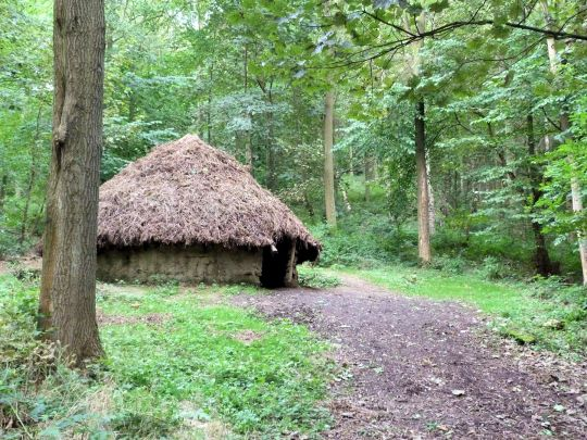 Shelter in Raincliffe Woods