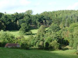 Woods of Lockton