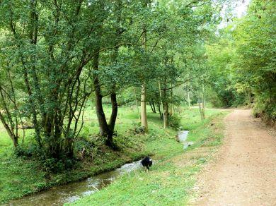 Collier Hag Wood