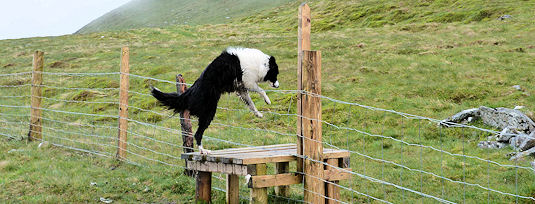 Leaping a fence