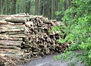 Pocklington Wood