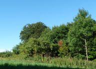 Sledmere Park