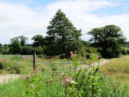 Hollybank Wood