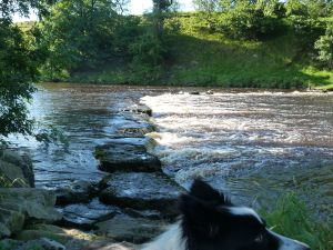 Aysgarth Falls stepping stones