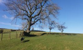 Pennine Way above Lothersdale