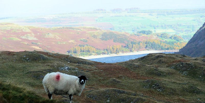 Keeping guard on Kidsty Pike