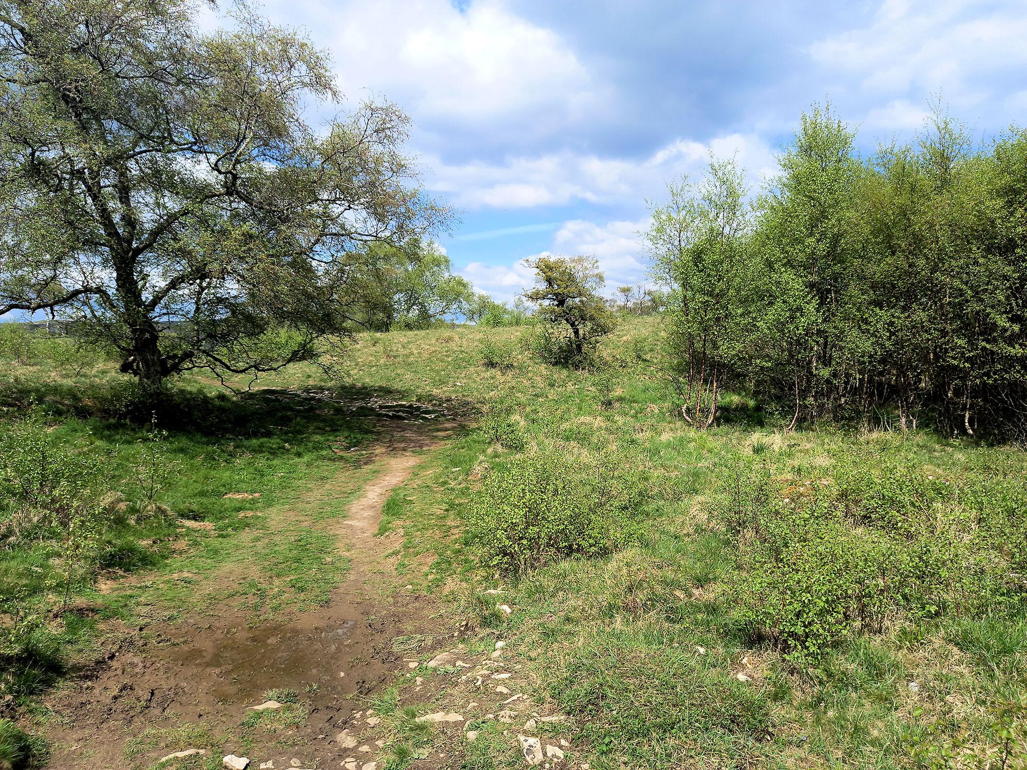 Entering Grass Woods
