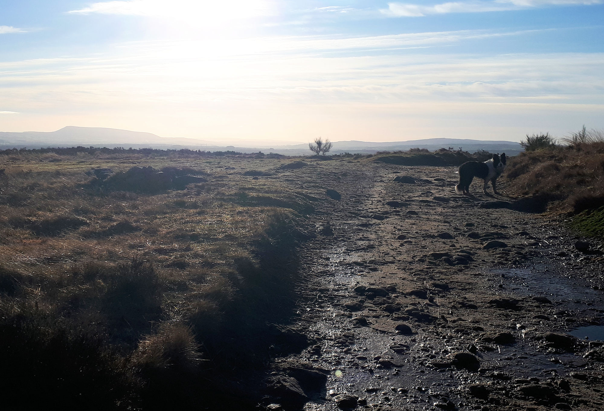 Moor Lane to Pendle Hill