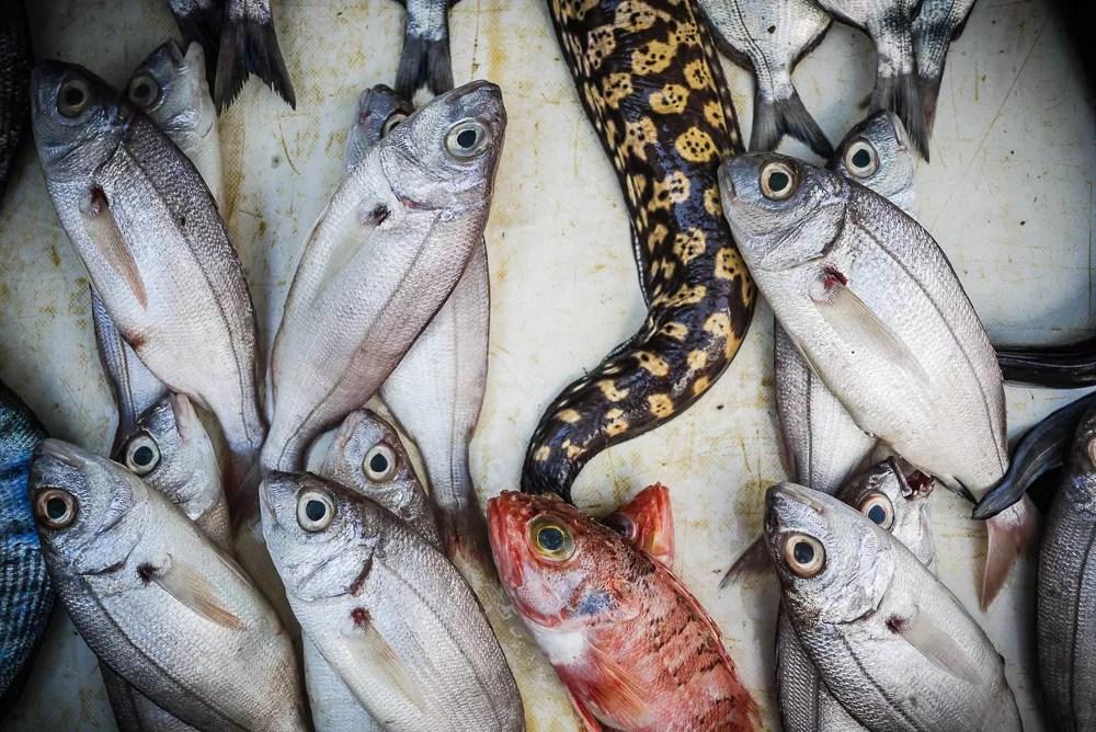 Fresh fish caught in Essaouira, Morocco