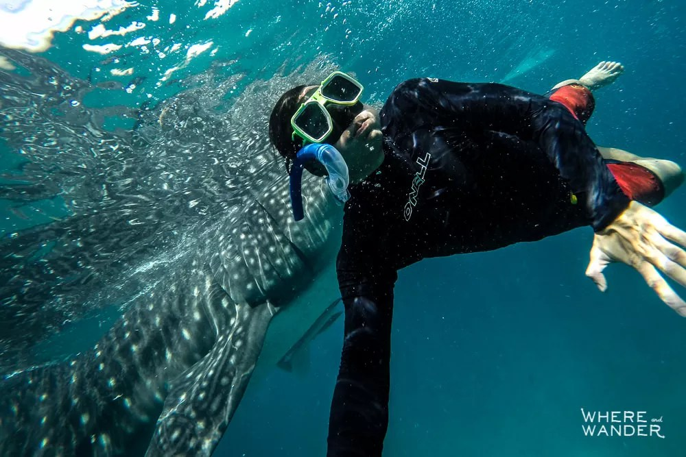 Best-Place-To-See-Whale-Sharks-Thailand