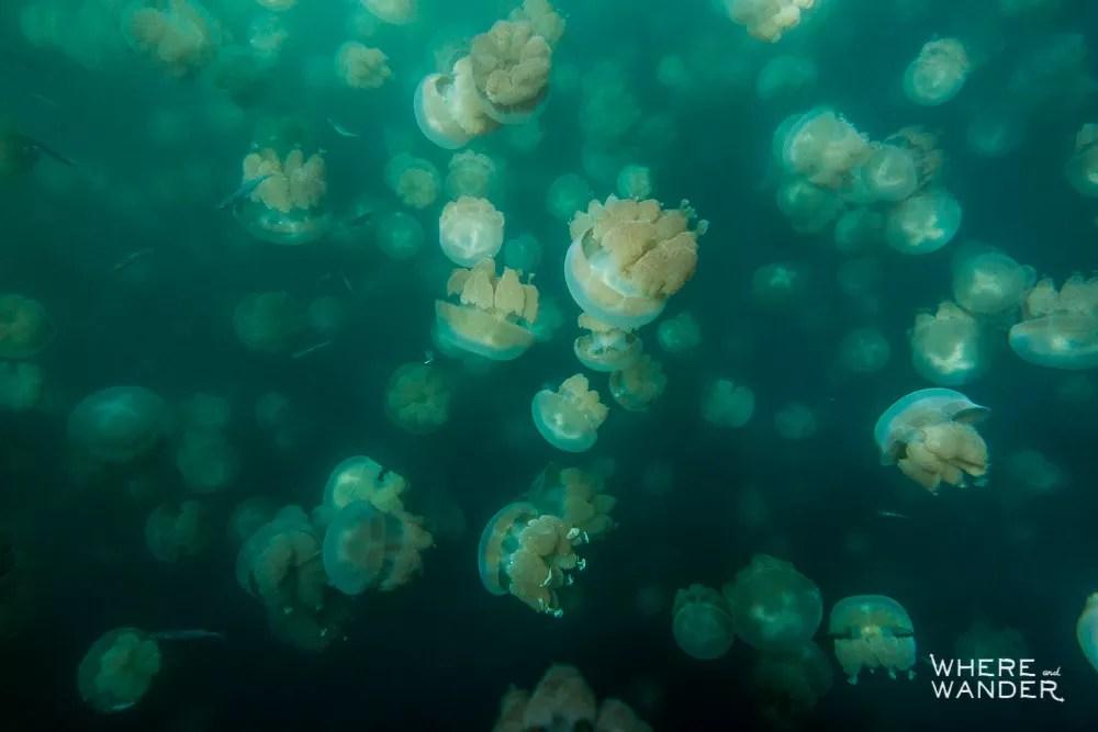 San Francisco Based International Underwater Photographer