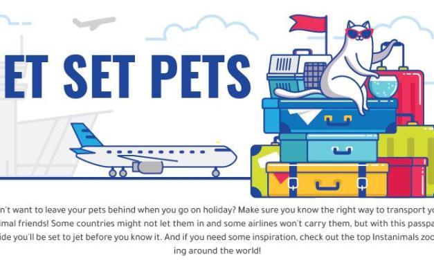 Pets On A Plane: Best And Worst Airlines For Pets