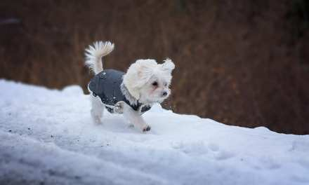How to Keep Dogs Safe During Cold Weather Walks