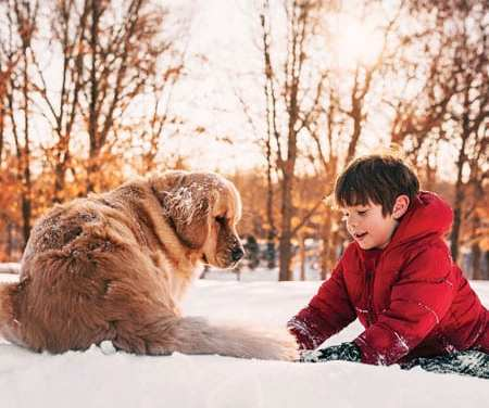 Help Pets Ward Off Winter Risks