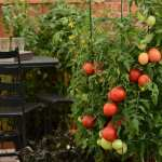 Grow your own food in small spaces