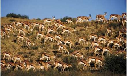 How YouCan Enjoy the Real African Safari in Off-Season