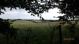Chartridge Lane