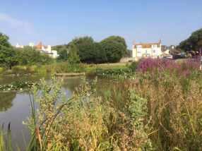 Rottingdean village pond