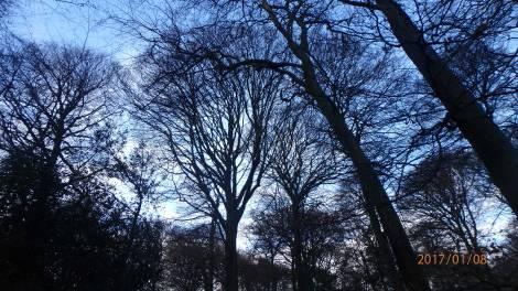 winter-tree-canopy-Monkton-Wood