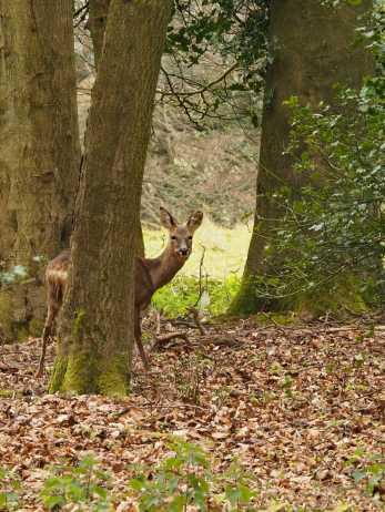 Deer,-High-Scrubs
