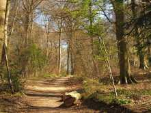 Fugsdon Wood