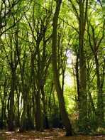 New-Copse,-Gallowstree-Common,-Oxfordshire